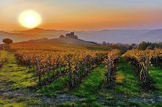 Il fascino dell'autunno nelle vigne dell'Oltrepo