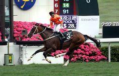 Blazing Speed (GB) 2009 B.g. (Dylan Thomas (IRE)-Leukippids (IRE) by Sadler's Wells (USA) 1st Queen Elizabeth II Cup (HK-G1,2000mT,Sha Tin)