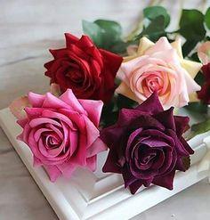 ♡♡ Színes Rózsák ♡♡