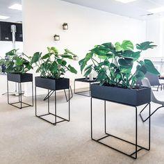 """73 Synes godt om, 1 kommentarer – Greenify København (@greenifydk) på Instagram: """"// ORGANISK VÆG // Lav en frodig opdeling af områder i hjemmet eller på kontoret. Monstera fungerer…"""""""