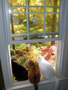 Los gatos en los jardines
