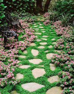 7 bellissime piante perfette per abbellire il vialetto | Guida Giardino