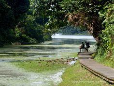 Chemperai walking Trail at MacRitchie Reservoir, Singapore
