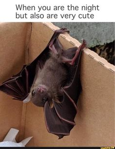 Cute little bat! Funny Animal Memes, Funny Animal Pictures, Funny Animals, Cute Animals, Funny Memes, Beautiful Creatures, Animals Beautiful, Animals And Pets, Baby Animals