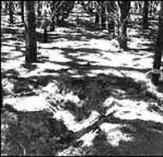 shallow graves of the victims