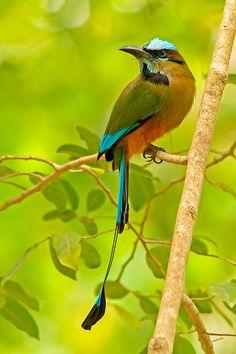 56 New Ideas Little Bird Flying Nature Pretty Birds, Love Birds, Beautiful Birds, Animals Beautiful, Small Birds, Colorful Birds, Kinds Of Birds, Mundo Animal, Exotic Birds