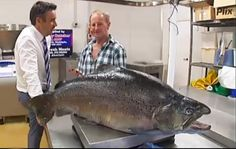 Article: Kiwi Angler's 42 lb. Brown Trout is Official IGFA World Record
