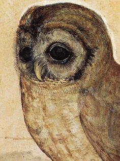 Albrecht Dürer , The Little Owl (detail), 1506.