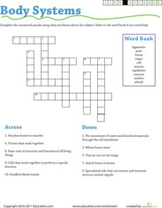 Life Science Crossword: Body Systems Worksheet