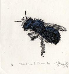 New to minouette on Etsy: Blue Orchard Mason Bee Osmia Lignaria Linocut - Pollinator Bee Biodiversity Print Collection Lino Block Print (30.00 USD)