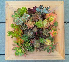 Vertical Succulent Garden by TerrabyTerri