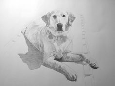How to draw a dog - excellent videos show how to draw different types of dogs