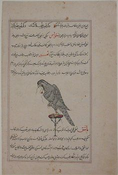 """""""Hawk on Perch"""", Folio from a Bestiary and Herbal Date: ca. 1600 Geography: Iran, Isfahan Medium: Opaque watercolor and gold on paper Dimensions: H. 12 7/8 in. (32.7 cm) W. 8 9/16 in. (21.7cm) Metropolitan Museum of Art 65.271.4"""