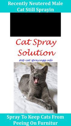 combining flea treatments for cats