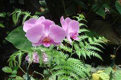 Пошаговая инструкция,как пересадить орхидею