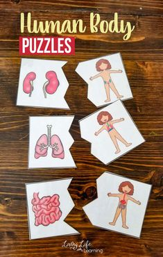 Have a blast learning about the human body with these fun human body puzzles to learn about the human body organs and the human body systems they belong to.  A fun biology actvity to get to know the human body systems found in your body.  #humanbody #science #biology #homeschool