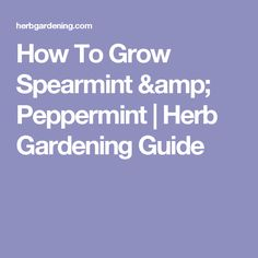 How To Grow Spearmint & Peppermint | Herb Gardening Guide