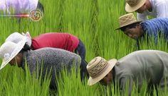 ONU: Dois em cada cinco norte-coreanos são subnutridos. Dois em cada cinco norte-coreanos estão subnutridos e mais de 70% da população depende de ajuda alim