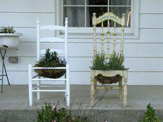 chair plants - Google Search