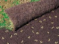 I've got a grub worm problem that then brings in a gopher problem which both lead to lawn problems so thought I'd share the knowledge.