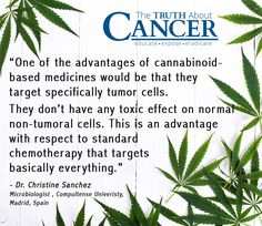 The marijuana plant has been used in just about every culture for centuries. Surely you've also heard that it is quite widely used for medicinal purposes, including by those who are faced with cancer. If you use cannabis for cancer, do it right. Here is how this miracle plant helps the body heal. Click through to read & re-pin to help us spread the truth & educate others! // The Truth About Cancer