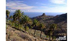 Rural landscape ~ Phoenix canariensis on La Gomera