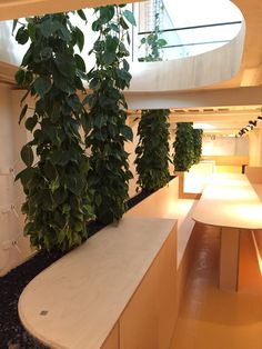 Klimplanten op verlengde basis in maatwerk interieur