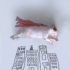jimmy-choo-bull-terrier-ilustraciones-rafael-Mantesso-2