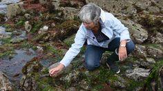 VIDÉO - Cueillir et cuisiner les algues des côtes bretonnes