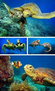 Love turtles ❤️