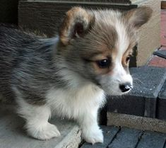 Quite Possibly The Cutest Animals On The Internet! – 32 Pics