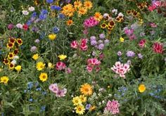 Planting Wildflower Seeds In The Fall « THE PERFECT GARDEN HOSE