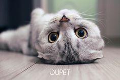 """Neuvoja kissan kanssa leikkimiseen <3  """"Kissanpäivät"""" sanonnalla on hyvin positiivinen kaiku. Mutta miten kissanomistaja voi pitää huolen leikin avulla, että kissa ei tylsisty?    """"Time spent with a cat is never wasted."""" Read from our blog how to keep your cat happy."""