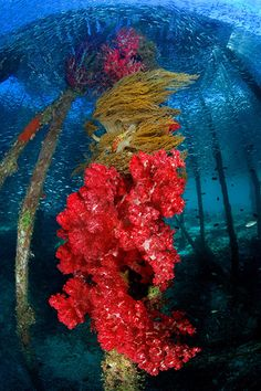 Raja Ampat - DEEP Indonesia 2010: 4th annual DEEP Indonesia international underwater photography competition