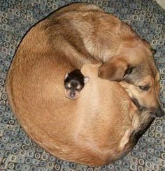 Doggie donut filled with doggie donut hole?