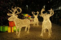 Lights make the reindeer and sleigh stand out. #festive #lighting #LED #holiday