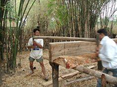 cutting wood in Thailand.