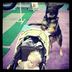 The Northwest Women's Show is always exciting! This German Shepherd from @Got Sit Dog Training shows off his tricks and pushes the baby stroller along at the #NWWS. What a good dog!