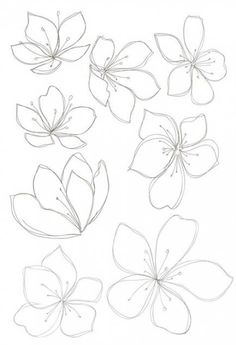 new Ideas flowers drawing design new Ideas flowers drawing design plants Cherry sakura blossom floral seamless pattern Vector Image Bobbie Print: Flower drawings - - Drawing Step By Step Butterfly Tutorials 43 Ideas Spring cherry blossom wallpaper Flower Pattern Drawing, Flower Drawing Tutorials, Flower Sketches, Floral Drawing, Drawing Flowers, Flower Drawings, Flowers To Draw, Flower Design Drawing, How To Draw Flowers Step By Step