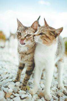Kitty BFFs!