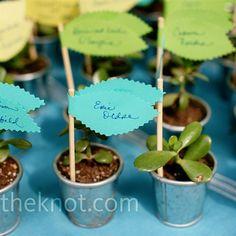 plant placecards/favors