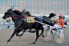 Harness Racing... Loved when my parents had the business so much fun