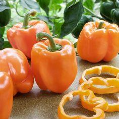 Bell Pepper Sweet Orange Sun Vegetable Seeds (Capsicum annuum) 50+Seeds