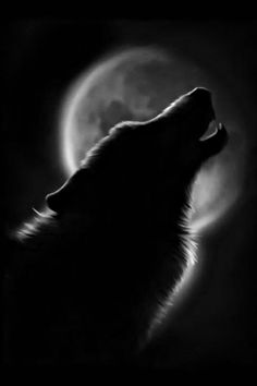 ~Even a man who is pure in heart says his prayers by night ~ may become a wolf when the wolfbane blooms the autumn moon is bright ~* Bark At The Moon, Howl At The Moon, Wolf Spirit, My Spirit Animal, Beautiful Creatures, Animals Beautiful, Wolf Pictures, Wolf Images, Beautiful Wolves