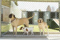 Canil - Tenha o lar ideal para os cães
