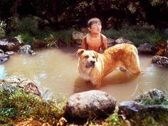 Old Yeller starred a Black Mouth Cur named Spike. Spike starred also in other movies and tv shows Old Yeller starred a Black Mouth Cur named Spike. Spike starred also in other movies and tv shows Old Yeller starred a Bla Big Dogs, Dogs And Puppies, Doggies, Black Mouth Cur Dog, Best Classic Movies, Dog Films, Old Yeller, Famous Dogs, Famous People
