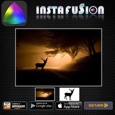 Instafusion Image Blender #cameras #camera #foto #fotografie #pics #apps #blend #merge #plus #blending #superimpose #camerazoomfx #radius #giveme #twitter #artisticphotographs #artistic #creations #reflection #android #reviews2015 #appupdates #googlenow #googleplay #App #instafusion #photography  ------------------ Glowing like gold in the fresh morning sun - photo processed and blended with Instafusion app!!   http://appcrawlr.com/app/show/2392941