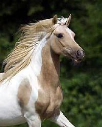 I want this horse <3