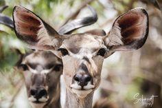 Familienfotografie am Bodensee 📷 Neugeborene 🍼 Kinder 👫 Familien 👨👩👧👦 Paare 💑 Schwangere 🤰🏼 Hunde 🐕 Schmidt, Okavango Delta, Game Reserve, Wildlife Photography, African, Animals, Other, Animales, Pictures