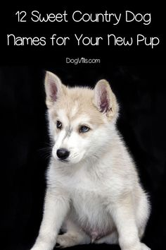 You don�t have to live in the south to give your new pooch one of these 12 sweet country #dog names! Check them out! Bulldog Puppies, Dogs And Puppies, Country Dog Names, Dog Training Bells, Dog Breeds Little, Puppy Mix, Best Dog Food, Dog Boarding, Shepherd Dog